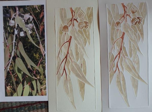 Eucalyptus 2 and 3