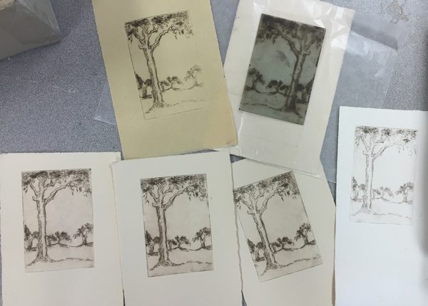 Australian Ghost Gum dry point plate and prints