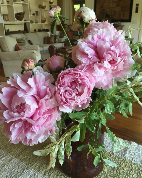 peonies from Andys