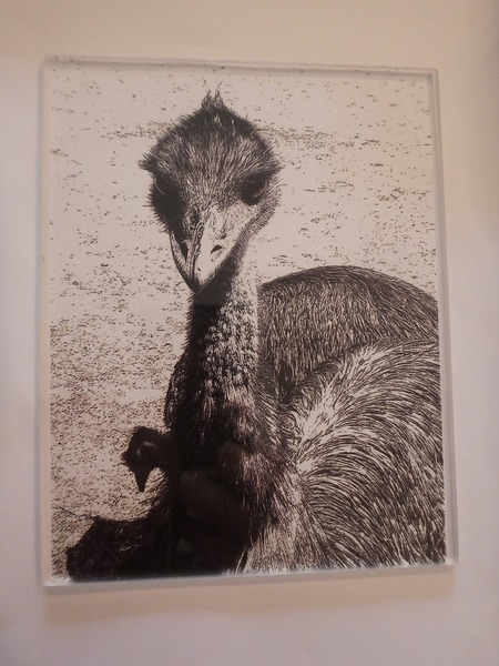 Dry point etching plate of emu