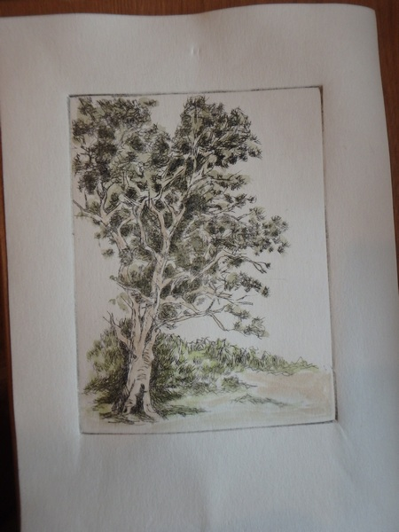 colored etching of gum tree