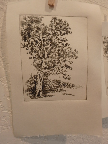 dark gum tree etching