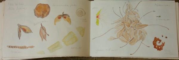 australia-sketchbook-03